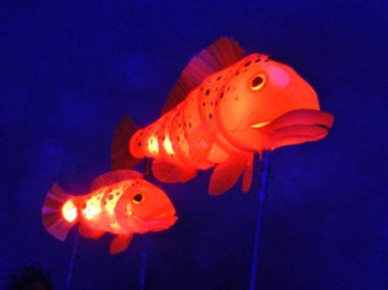 The Little Mermaid – Lantern Fish